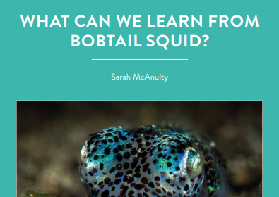 Sarah McAnulty from the University of Connecticut is looking at a very intriguing relationship between a bacteria and bobtail squid. Why? Her work could tell us a […]