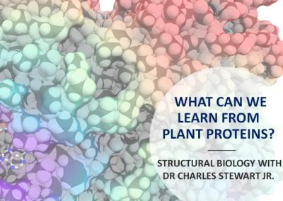 What can we learn from plant proteins?