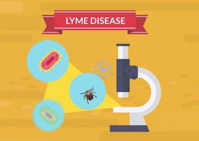 Understanding the mechanisms behind lyme disease